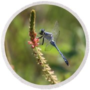 Blue Dragonfly On Pink Flower Round Beach Towel