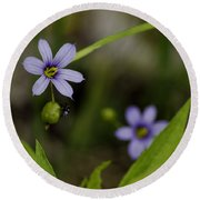 Blue Eyed Grass Round Beach Towel