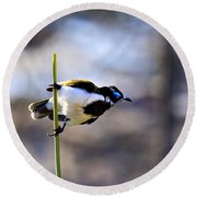 Blue Faced Honey Eater V3 Round Beach Towel