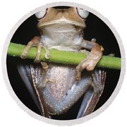 Blue-flanked Tree Frog Round Beach Towel
