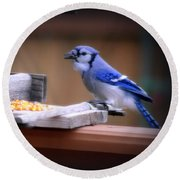 Blue Jay On Backyard Feeder Round Beach Towel