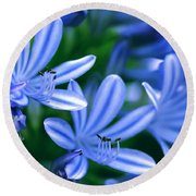 Blue Lily Of The Nile Round Beach Towel