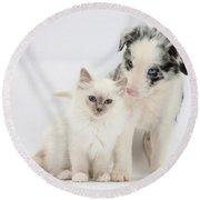 Blue-point Kitten And Border Collie Round Beach Towel