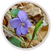 Blue Violet Wildflower - Viola Spp Round Beach Towel