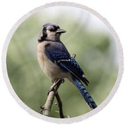 Bluejay - Bird Round Beach Towel