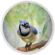 Bluejay In A Tree Round Beach Towel