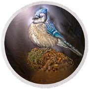 Bluejay In Spotlight Round Beach Towel
