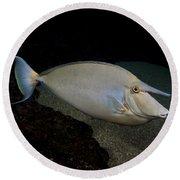 Bluespine Unicornfish Round Beach Towel
