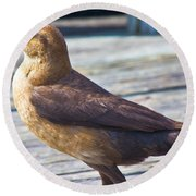 Boat Tail Grackle Round Beach Towel