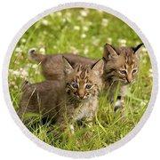 Bobcat Kittens Round Beach Towel