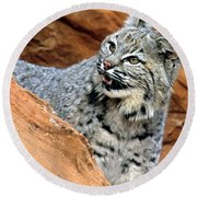 Bobcat With A Smile Round Beach Towel