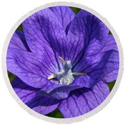 Bodacious Balloon Flower Round Beach Towel