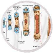 Bone Growth Round Beach Towel by Science Source