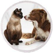 Border Collie & Siamese Cat Round Beach Towel