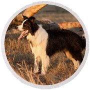 Border Collie At Sunset Round Beach Towel