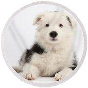 Border Collie Female Puppy Round Beach Towel