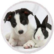 Border Collie Pup And Dutch Rabbit Round Beach Towel