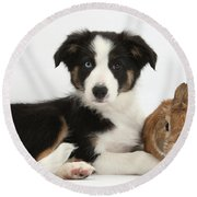 Border Collie Pup And Netherland-cross Round Beach Towel
