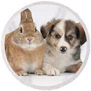 Border Collie Pup And Sandy Round Beach Towel
