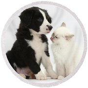 Border Collie Pup And White Kitten Round Beach Towel
