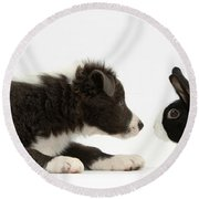 Border Collie Puppy And Rabbit Round Beach Towel