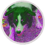 Border Collie Stare In Colors Round Beach Towel by Smilin Eyes  Treasures