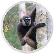 Bornean White-bearded Gibbon Round Beach Towel