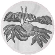 Botany: Breadfruit Tree Round Beach Towel