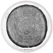 Botany:  Fir Tree Trunk Round Beach Towel