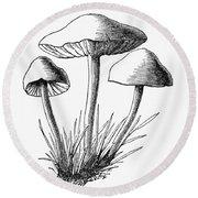 Botany: Mushroom Round Beach Towel