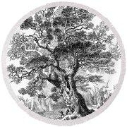 Botany: Oak Tree Round Beach Towel
