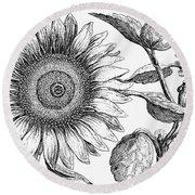 Botany: Sunflower Round Beach Towel