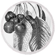 Botany: The Cherry Round Beach Towel