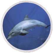 Bottlenose Dolphin Round Beach Towel