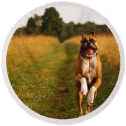 Boxer Dog Running Happily Through Field Round Beach Towel by Stephanie McDowell