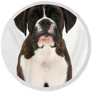 Boxer Pup Round Beach Towel by Mark Taylor