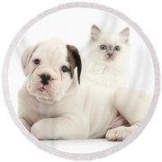 Boxer Puppy And Blue-point Kitten Round Beach Towel