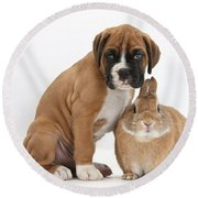 Boxer Puppy And Netherland-cross Rabbit Round Beach Towel by Mark Taylor