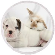 Boxer Puppy And Young Fluffy Rabbit Round Beach Towel by Mark Taylor