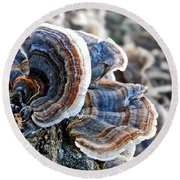 Bracket Fungi - Fungus Round Beach Towel
