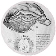 Brain And Pineal Gland Round Beach Towel