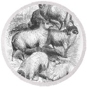 Breeds Of Sheep, 1841 Round Beach Towel