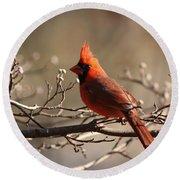 Bright Bold - Cardinal Round Beach Towel