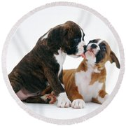 Brindle Boxer Pups Round Beach Towel