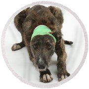 Brindle Lurcher Wearing A Bandage Round Beach Towel