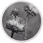 Bristle Thistle In Black And White Round Beach Towel