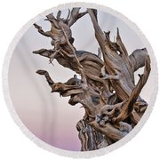 Bristlecone Pine - Early Morning - 1 Round Beach Towel