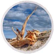 Bristlecone Pine In Repose Round Beach Towel
