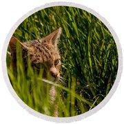 British Wild Cat Round Beach Towel