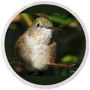 Broadbill Hummingbird Round Beach Towel